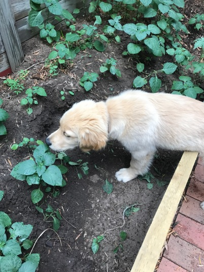 Taste testing plants & digging holes is helpful, right?